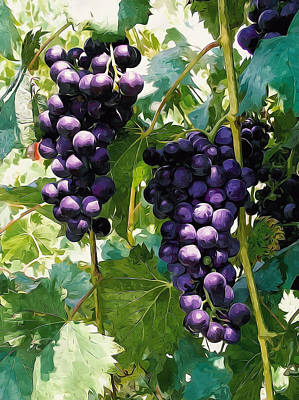 Clusters Of Red Wine Grapes Hanging On The Vine Poster by Lanjee Chee
