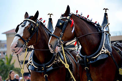 Poster featuring the photograph Clydesdales 2 by Amanda Vouglas