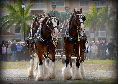 Poster featuring the photograph Clydesdales 4 by Amanda Vouglas