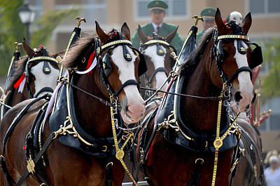 Poster featuring the photograph Clydesdales by Amanda Vouglas