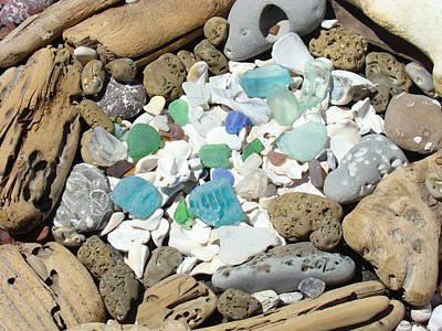 Coast Seaglass Art Prints Shells Fossils Driftwood Poster