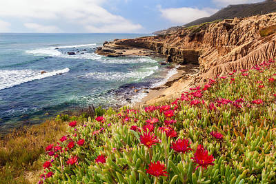 Coastal Bloom Poster