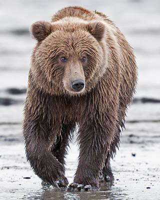 Coastal Brown Bear A Walk On The Beach Poster by Gary Langley
