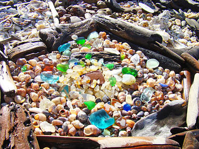 Coastal Seaglass Art Prins Shells Driftwood Poster by Baslee Troutman