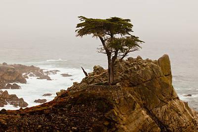 Coastline Cypress Poster by Melinda Ledsome