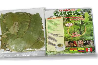 Coca Leaves From Peru Poster by Dr Morley Read