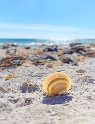 Poster featuring the photograph Cockle Shell Summer At Sanibel by Peta Thames