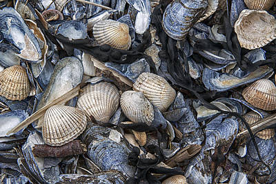 Cockles And Mussels Poster