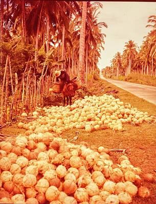 Coconut Harvest Beside Main Highway Poster by Nick De Morgoli