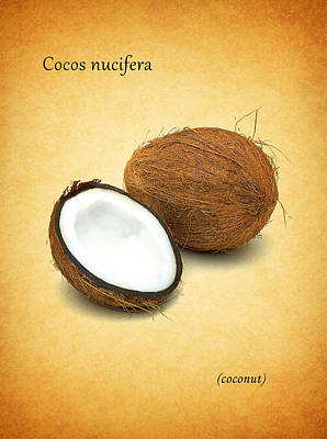 Coconut Poster by Mark Rogan
