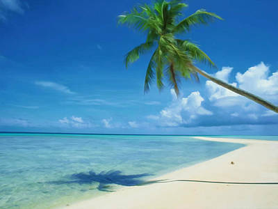 Coconut Palm Tree At Beach Poster
