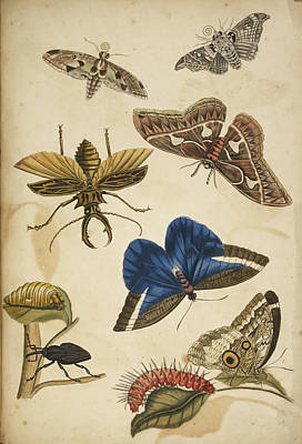 Cocoon Poster by British Library