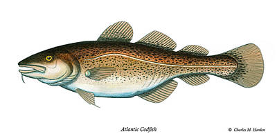 Codfish Poster by Charles Harden