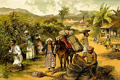 Coffe Plantation  Poster by Private Collection
