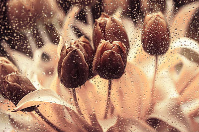 Coffee Tulips Poster