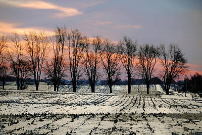 Cold Morning Treeline Poster