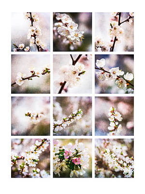 Collage Mysteries Of Spring Poster