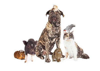Collage Of Household Pets Poster by Susan Schmitz