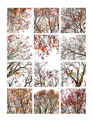 Collage The Beauty Of Rowan Poster