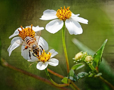 Poster featuring the photograph Collecting Pollen by Dawn Currie