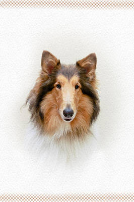 Collie Portrait Poster by Crystal Wightman
