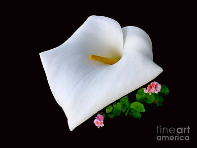 Colombian Calla Lily Poster