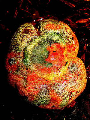 Poster featuring the photograph Color Collage Mushroom by John King