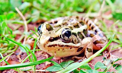 Color Wood Frog Poster by Art Dingo
