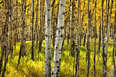 Colorado Fall Aspens 6 Poster