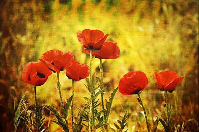 Colorado Poppies Poster
