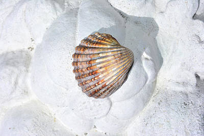 Colored Seashell  Poster