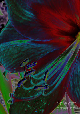 Colorful Neon Amaryllis Poster