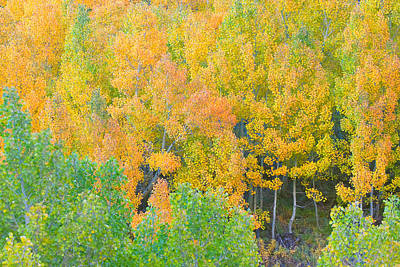 Poster featuring the photograph Colorful Aspen Forest - Eastern Sierra by Ram Vasudev