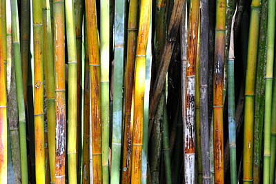 Poster featuring the photograph Colorful Bamboo by Jodi Terracina