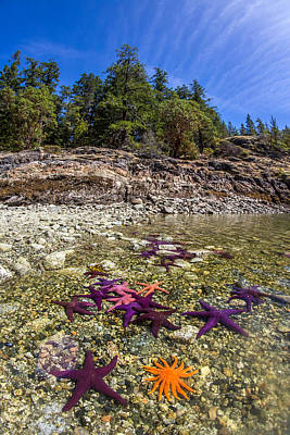 Colorful British Columbia Shoreline  Poster by Pierre Leclerc Photography
