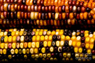 Colorful Corn Poster