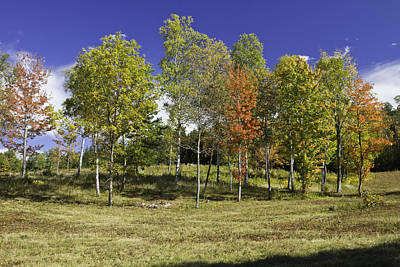 Colorful Fall Trees On Center Hill Mount Blue State Park In Main Poster by Keith Webber Jr