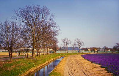 Colorful Fields Of Holland Poster by Jenny Rainbow