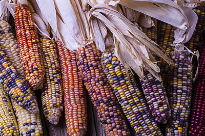 Colorful Indian Corn Poster by Garry Gay