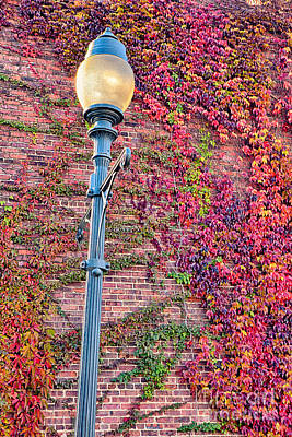 Colorful Ivy And Lamppost I Poster