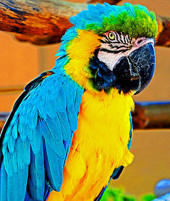 Colorful Macaw Poster by Jeanette Arango