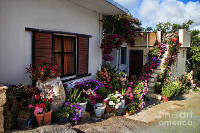 Colorful Potted Flower Garden At A Rural Home In Crete Poster