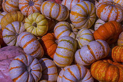 Colorful Pumpkins Poster by Garry Gay