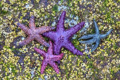 Colorful Starfish Bc Poster