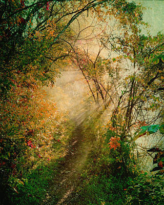 Colorful Sunlit Path Poster