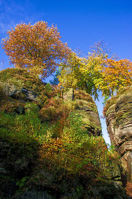 Colorful Trees In The Elbe Sandstone Mountains Poster