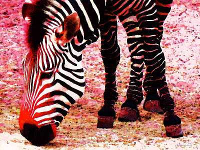 Colorful Zebra - Buy Black And White Stripes Art Poster by Sharon Cummings