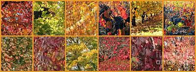 Colors Of Fall Collage Poster by Carol Groenen