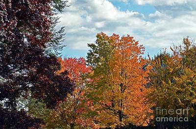 Colors Of Fall Poster by Judy Wolinsky