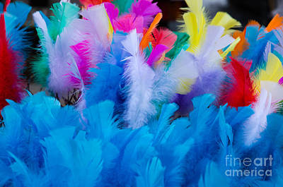 Coloured Easter Feathers Poster